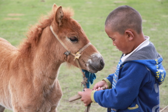 mongolia-tailor-made-tour-guide-nomads-2